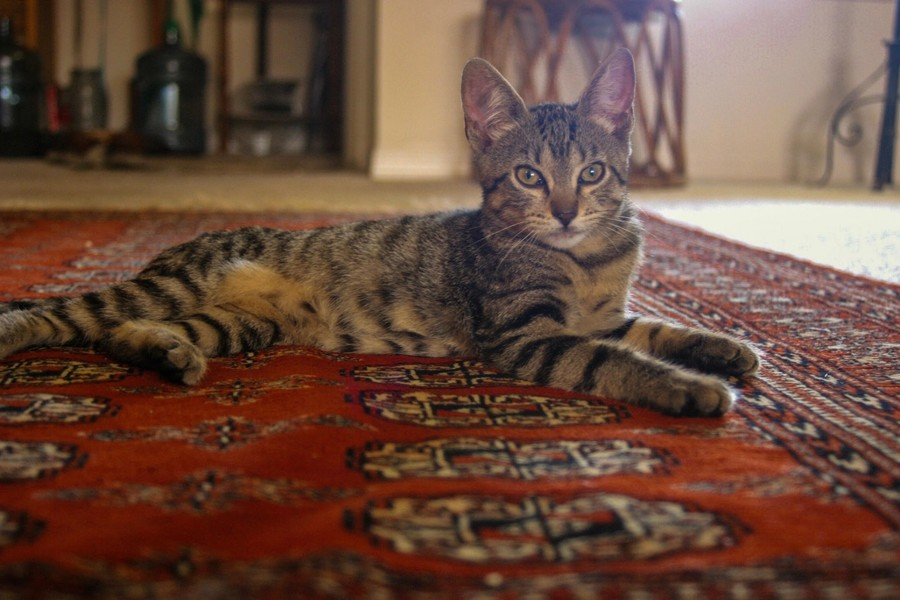 Oriental Rug Cleaning By A Friendly Carpet Cleaning